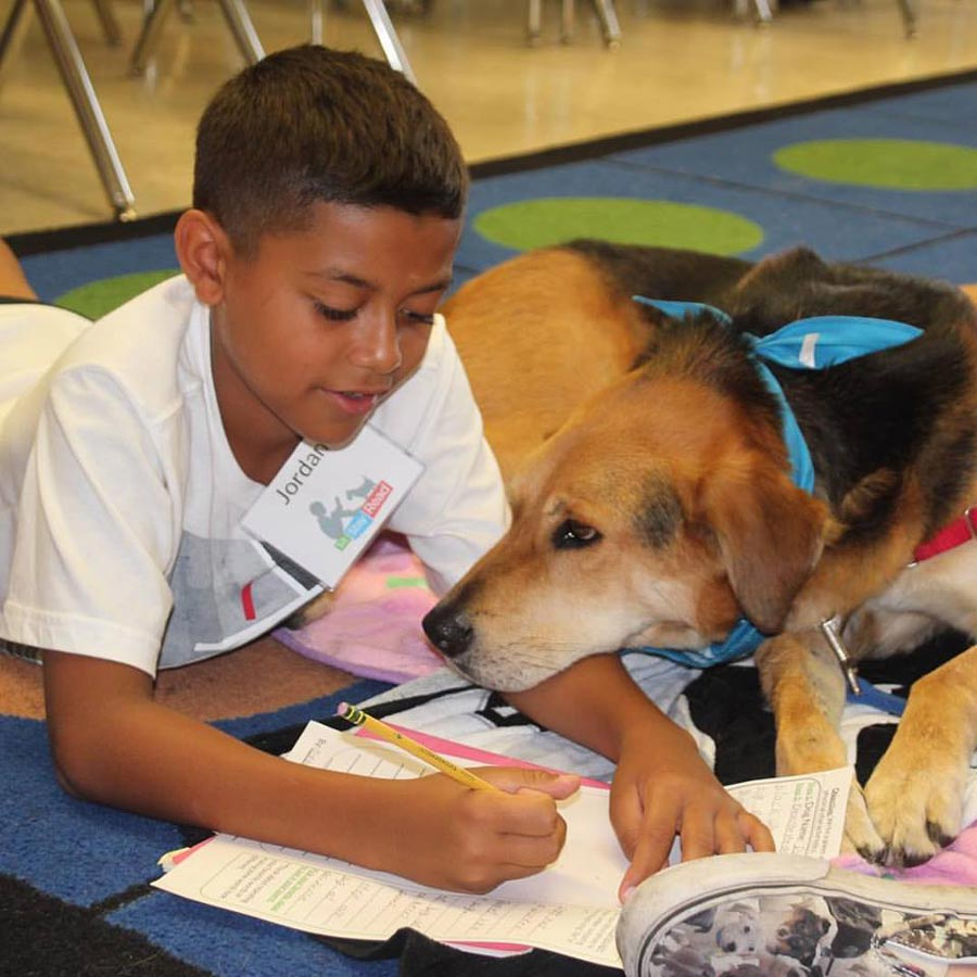 Pet Reading Therapy: One Author's Experience featured image